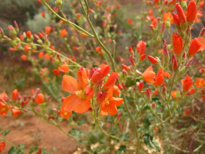 Pretty flowers were in bloom even in the middle of the desert